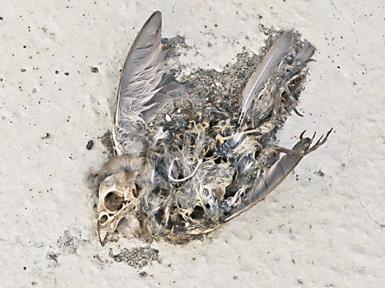 текст здесь птицы не поют: